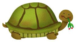 Turtle_slow